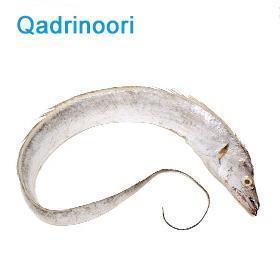 卡利 巴基斯坦 野生 冻带鱼(20)