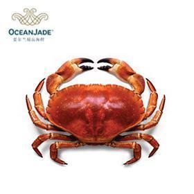 海洋玉 爱尔兰 野生 熟冻面包蟹(40)
