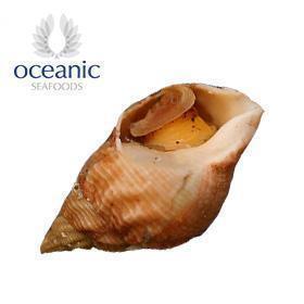 欧绅尼克 英国 野生 冻黄金螺(C)