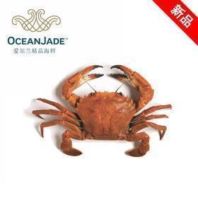 海洋玉 熟冻天鹅绒蟹(20尺)